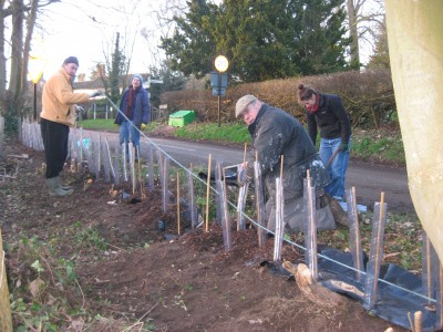Planting Low Road Hedge