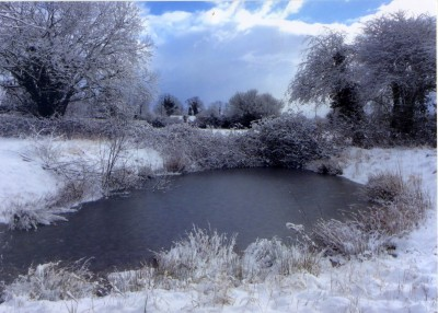 Winter's Frosty Pond