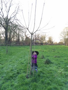 Charlotte age 4 and her tree. She was 3 months old when it was planted