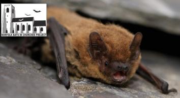 Bat image with logo