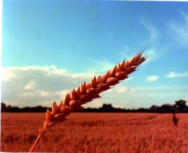 Harvest 2016 (U16)