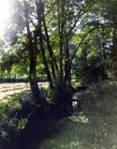 Haymaking On The Glebe