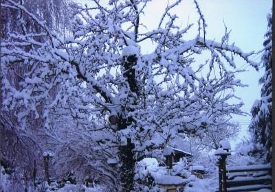 One Snowy Day (J)