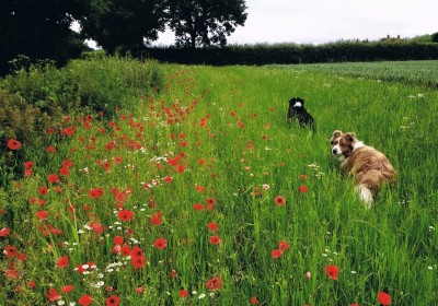 Poppies & Puppies