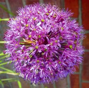 Purple Ball Of Stars158