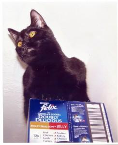 Starston Cat